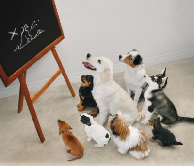 Dog Training Plan For Back Up